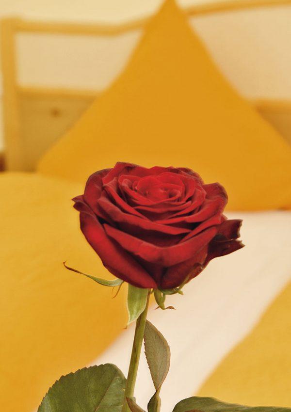 schoenblick-zimmer-rose